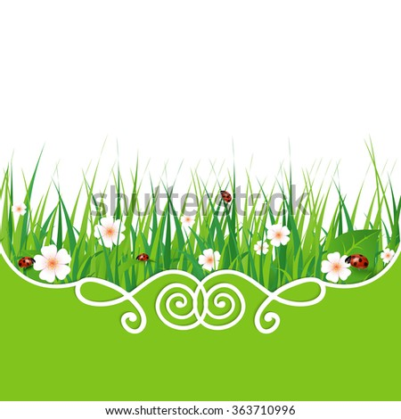 Green grass lawn isolated on white. Floral nature spring background