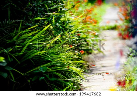 Green grass leaves in garden. - stock photo
