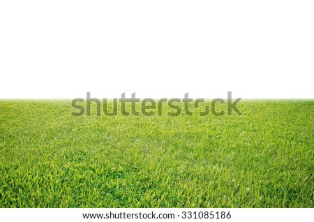 green grass meadow field from outdoor park isolated in white background - stock photo
