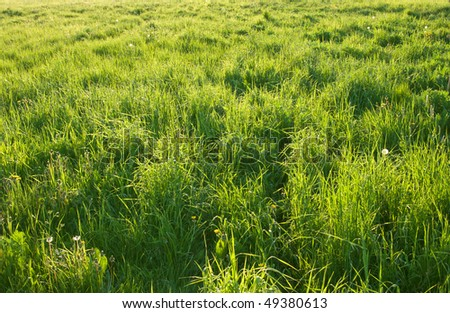 green grass meadow with sunlight spots - stock photo