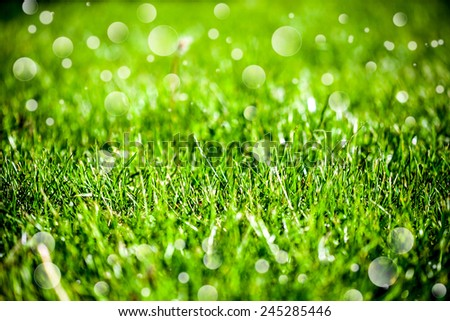 Green grass natural background - stock photo