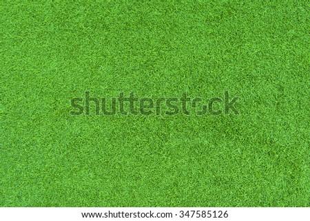 green grass. natural background texture. fresh spring green grass. - stock photo