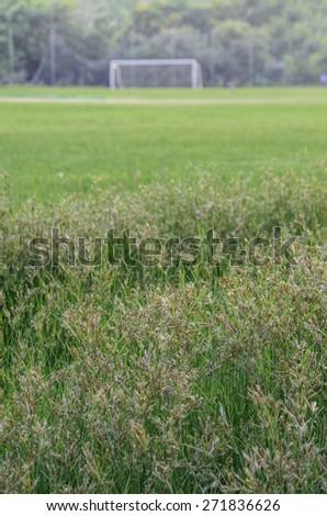 Green grass of fields  - stock photo