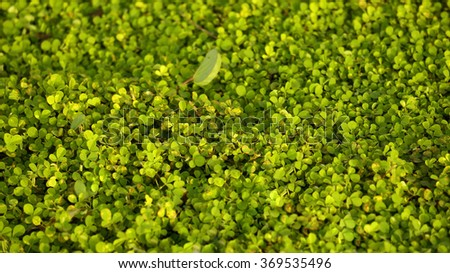 green grass of the golf course, texture Wallpaper - stock photo