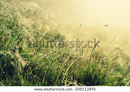 Green grass on a meadow with shiny dew water drops, abstract natural background - stock photo