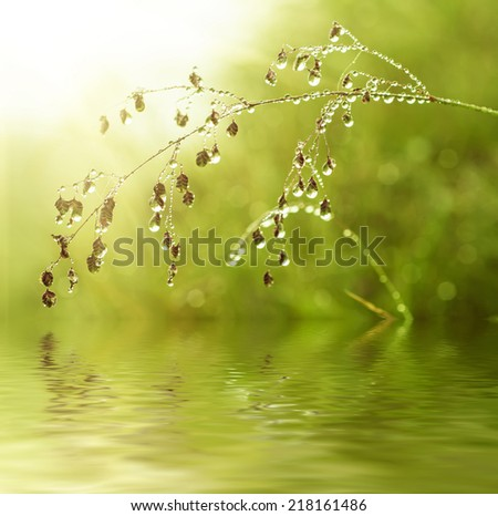 Green grass on a meadow with shiny dew water drops with water reflection - stock photo