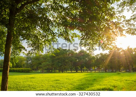 Green grass on a sunny meadow of city park, Sun light - stock photo