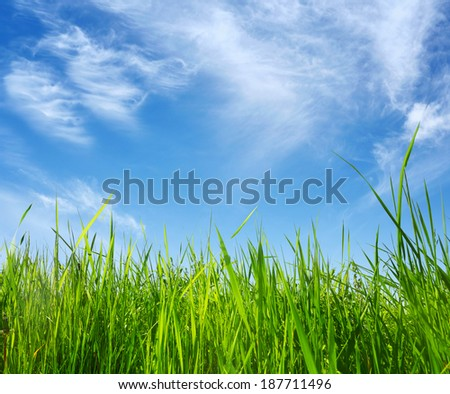 green grass on blue sky background in summer day - stock photo