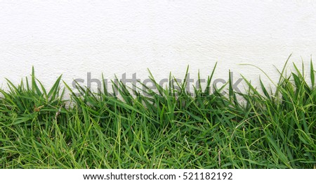 Green Grass on Cement Background. Empty for text your