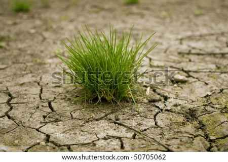 Green grass on cracked earth - stock photo