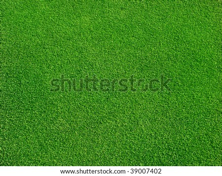 Green grass on golf course - stock photo