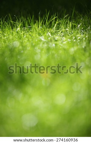 green grass on green background - stock photo