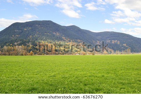 green grass on lawn and yellow trees in mountain - stock photo