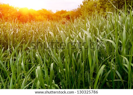 Green grass on meadow - stock photo
