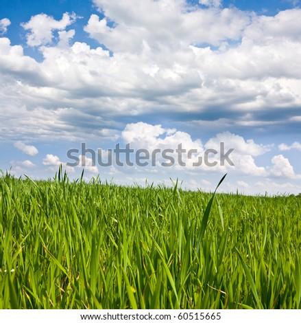 Green grass on meadow under nice sky - stock photo