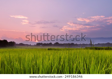 Green grass on meadow with sunset - stock photo
