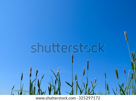 Green grass on sky background
