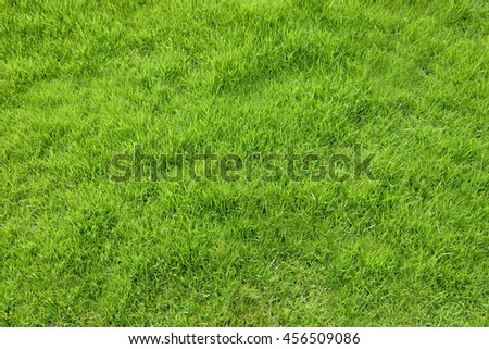 Green grass on the background - stock photo