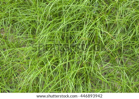 Green grass on the beach top view background - stock photo