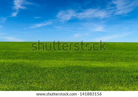Green grass on the field. microstock photo - stock photo
