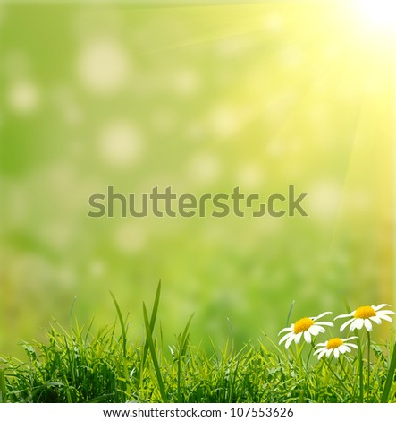 green grass on the green background - stock photo
