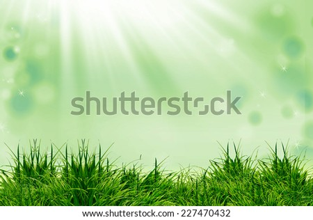 green grass on the green background and sunlight - stock photo