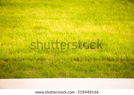 Green grass on the lawn. Selective focus. Shallow depth of field. Toned. - stock photo