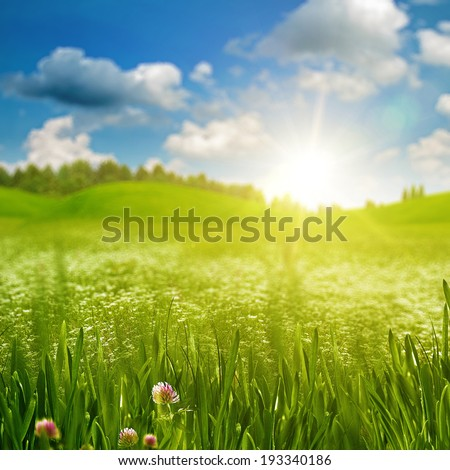 Green grass on the sunny meadow under the bright summer sun - stock photo