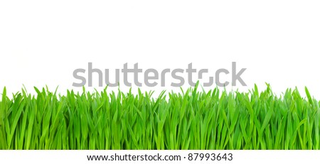 green grass on white