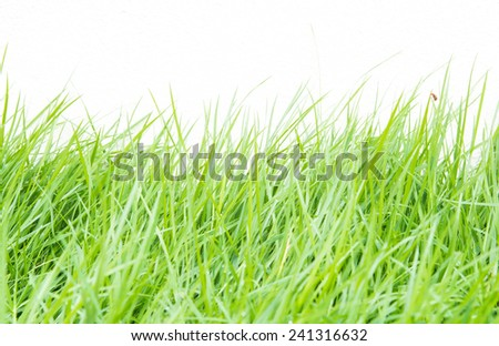 Green grass on white wall background - stock photo