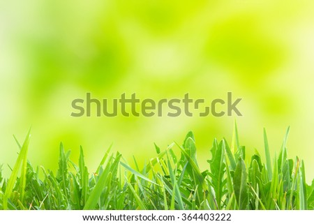 Green grass over soft yellow spring light sunny background - stock photo