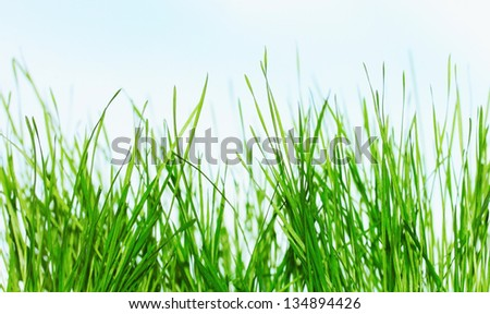 Green grass over the sky - stock photo
