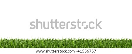 Green grass panorama isolated on white. - stock photo