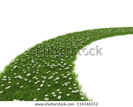 Green Grass path and daisy flowers