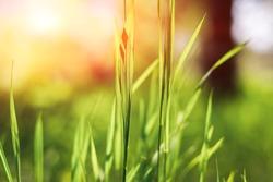 Texture of Tall Grass Field Free Stock Photo by Oleg Prokopenko on