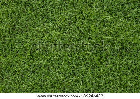 Green grass seamless texture is fresh