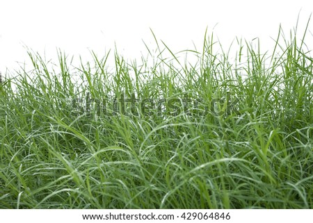 Green grass seamless texture on white