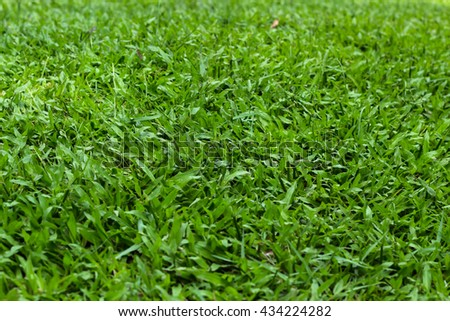 Green grass-selective focus, green yard - stock photo