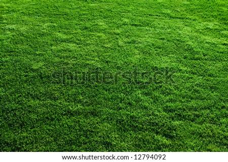 Green grass soccer field - stock photo