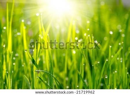 Green grass sunset - stock photo