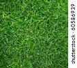 Green grass surface - stock photo