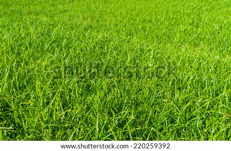 Green grass surface. Element of design. Ukraine, Europe. Beauty world. - stock photo