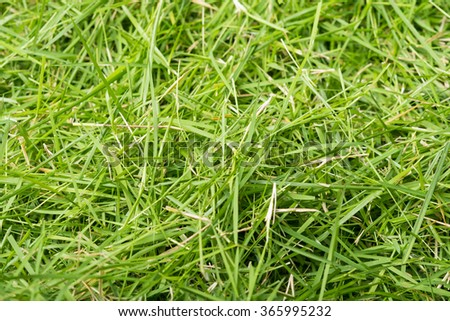 Green grass texture background, the leaf grass it cut - stock photo
