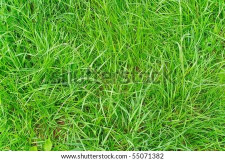 Green grass texture close up - stock photo