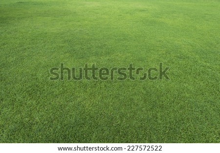 Green grass texture from a field - stock photo