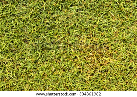 Green grass texture from a field For background and design - stock photo