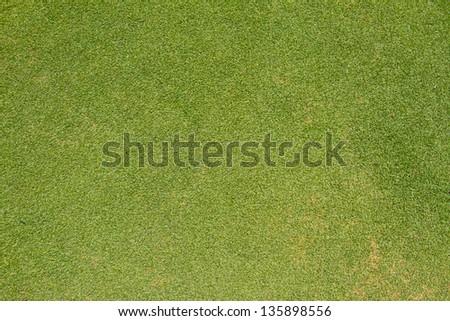 green grass texture from golf field - stock photo