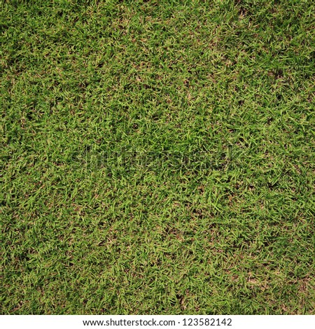 Green grass, Top view. - stock photo