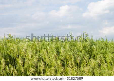 green grass under blue sky with clouds