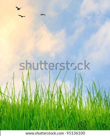 Green grass under blue sky with clouds with birds and sunlight - stock photo